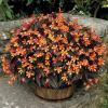 Plants @ £2.50/plant in 9cm pots